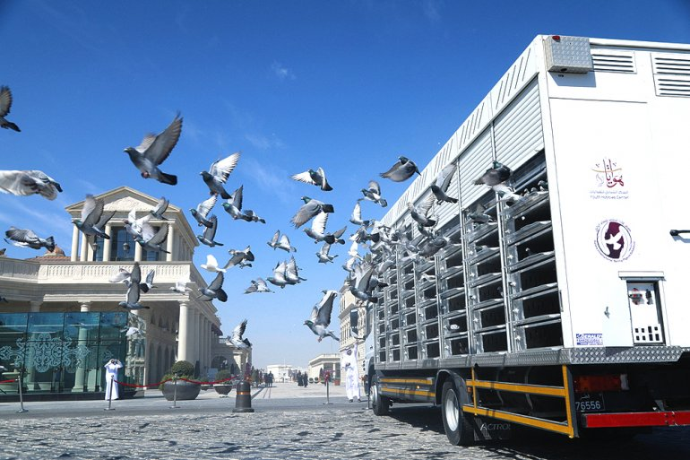 Photo of Pigeon Exhibition at Katara