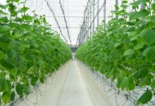 Photo of Ministry of Municipality And Environment Launch Guarantee Programme To Support Local Farms