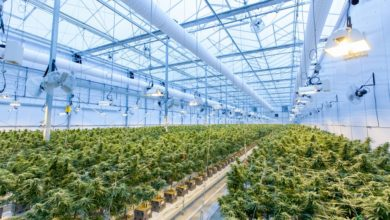 Photo of Qatar University & Ministry Of Municipality And Environment To Develop Nation's First Solar Agriculture Greenhouse