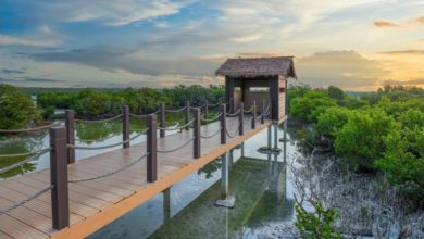 Photo of Paddle your way across the Mangroves